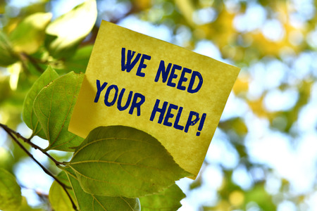 Word writing text We Need Your Help. Business photo showcasing asking someone to stand with you against difficulty Piece of square paper use to give notation on tree leaf under sunny day