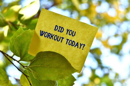 Word writing text Did You Workout Today. Business photo showcasing asking if made session physical exercise Piece of square paper use to give notation on tree leaf under sunny day