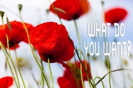 Writing note showing What Do You Want Question. Business concept for say or write in order to ask demonstrating about something Front view summer red color poppy flowers sky background Reklamní fotografie