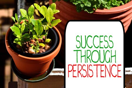 Writing note showing Success Through Persistence. Business concept for never give up in order to reach achieve dreams Plentiful plants on a small pot placed side by side with a large one