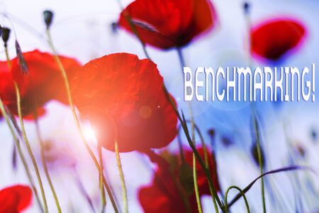 Writing note showing Benchmarking. Business concept for evaluate something by comparison with standard or scores Front view summer red color poppy flowers sky background Stock Photo
