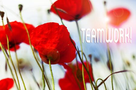 Writing note showing Teamwork. Business concept for combined action of group especially when effective and efficient Front view summer red color poppy flowers sky background 版權商用圖片