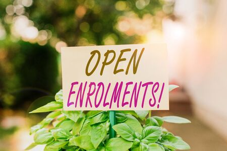 Handwriting text writing Open Enrolments. Conceptual photo when employees may make changes to elected fringe benefit Plain empty paper attached to a stick and placed in the green leafy plants