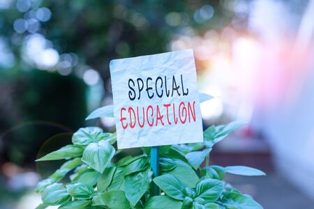 Word writing text Special Education. Business photo showcasing form of learning given to students with mental challenges Plain empty paper attached to a stick and placed in the green leafy plants Zdjęcie Seryjne
