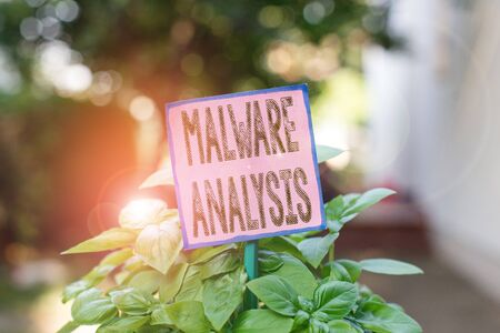 Writing note showing Malware Analysis. Business concept for performs deep analysis of evasive and unknown threats Plain paper attached to stick and placed in the grassy land Stock Photo