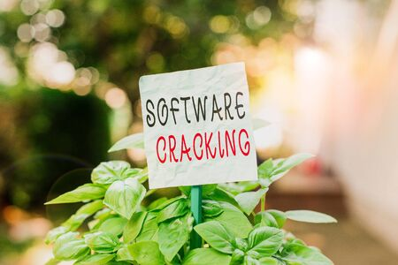 Word writing text Software Cracking. Business photo showcasing modification of software to remove or disable features Plain empty paper attached to a stick and placed in the green leafy plants Stockfoto