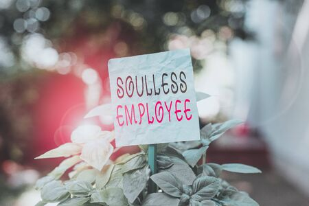 Word writing text Soulless Employee. Business photo showcasing lack huanalysis qualities and the ability to produce feelings Plain empty paper attached to a stick and placed in the green leafy plants