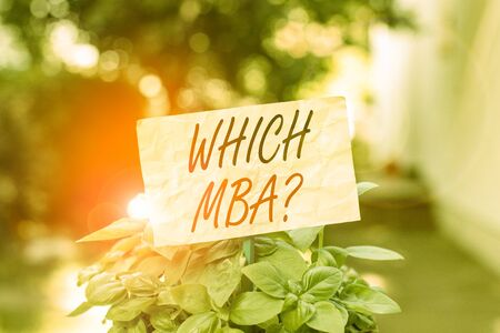 Word writing text Which Mbaquestion. Business photo showcasing asking for master s is degree in business administration Plain empty paper attached to a stick and placed in the green leafy plants
