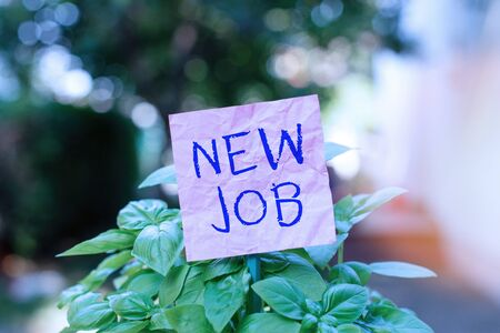 Conceptual hand writing showing New Job. Concept meaning recently having paid position of regular employment Plain paper attached to stick and placed in the grassy land