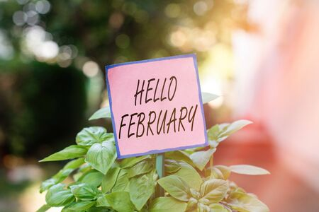 Writing note showing Hello February. Business concept for greeting used when welcoming the second month of the year Plain paper attached to stick and placed in the grassy land