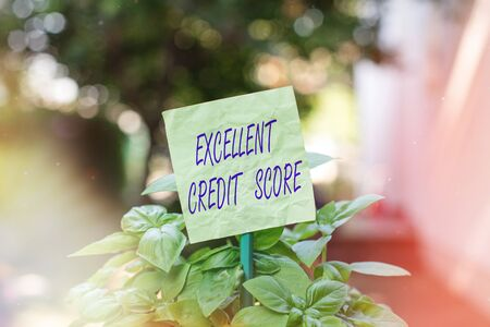 Text sign showing Excellent Credit Score. Business photo text an individual s is report of financial standing and capacity to pay Plain empty paper attached to a stick and placed in the green leafy plants