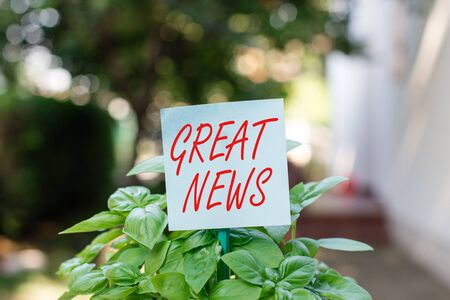 Writing note showing Great News. Business concept for the surprised reaction of learning good news or fortunate event Plain paper attached to stick and placed in the grassy land