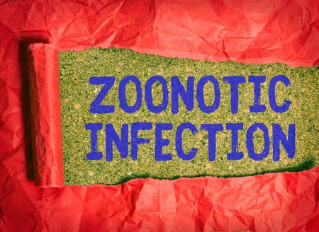 Conceptual hand writing showing Zoonotic Infection. Concept meaning communicable disease transmitted by a non viral agent Rolled ripped torn cardboard above a wooden classic table