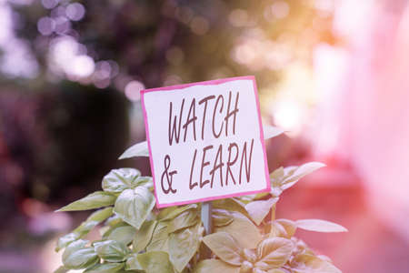 Handwriting text Watch And Learn. Conceptual photo demonstrating an action or ideas of how to do things Plain empty paper attached to a stick and placed in the green leafy plants