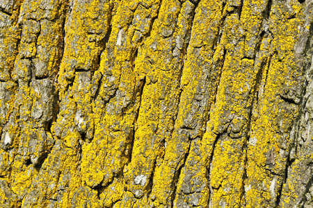tree bark texture, pattern for background or backdrop use Stock Photo - 6998361