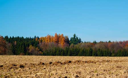 lanscape: Autumn lanscape colour trees and meadow Stock Photo
