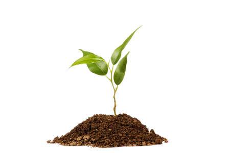 contaminacion ambiental: Joven planta en verde sobre un fondo blanco Foto de archivo