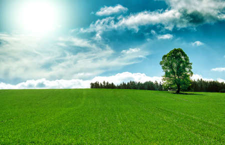 Sun and field of green fresh grass with tree under blue sky photo