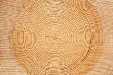 木の木材の自然な背景のスライス
