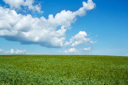 Beautiful summer rural landscape with green field and blue sky Stock Photo