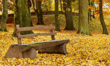 wooden bench in the park on fallen leaves background photo