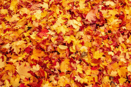 Fall orange and red autumn leaves on ground for background or backdrop photo