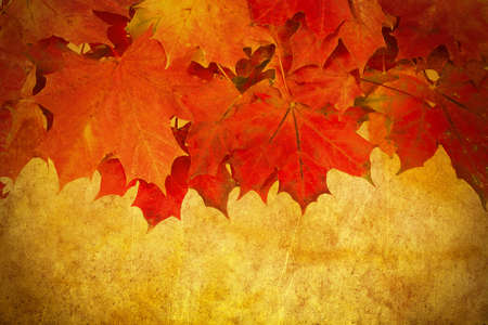 grunge red autumn leaves frame with space for your text photo