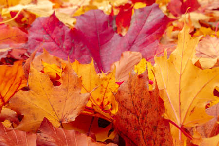 Fall orange and red autumn leaves on ground for background or backdrop Stock Photo - 16256802