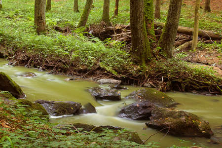 autumn mountain stream in a green forest photo