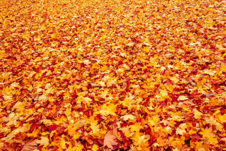 Fall orange and red autumn leaves on ground for background or backdrop Stock Photo - 16582227