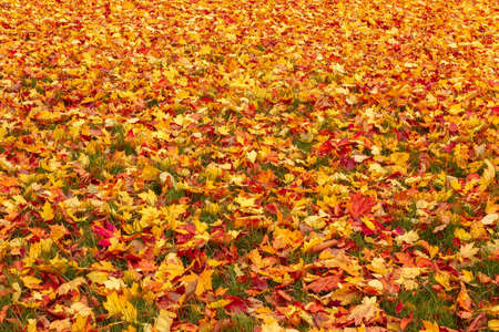 Fall orange and red autumn leaves on ground for background or backdrop Stock Photo - 16582239