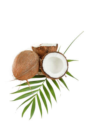 Coconut with leaves on a white background  Stock Photo - 17191454