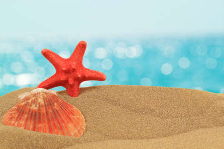 vacation background with seashell and starfish on sand with blue bokeh