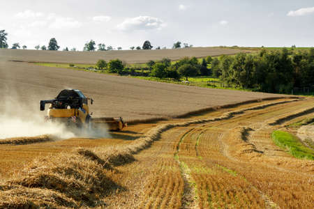 Yellov combine on field harvesting wheat in sunny weather Stock Photo