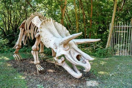 Prehistorische Dinosaur. Triceratops fossiele skelet over natuurlijke achtergrond. Stockfoto