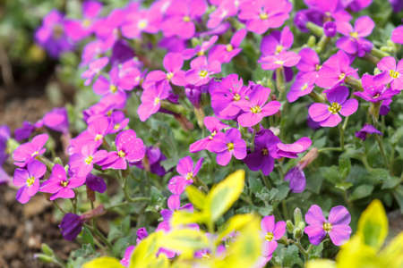 spring pink flowers in garden for natural background photo