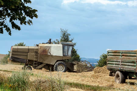 old combine on field harvesting wheat in sunny weather photo