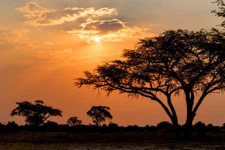 Afrikaanse zonsondergang met boom vooraan, Hwange National Park, Matabeleland, Noord-Zimbabwe