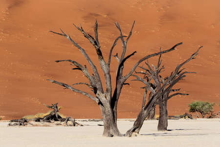 beautiful sunrise landscape of hidden Dead Vlei in Namib desert with blue sky, this is best place of Namibia photo