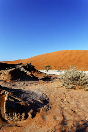 shaddow: beautiful sunrise landscape of hidden Dead Vlei in Namib desert with blue sky, this is best place in Namibia