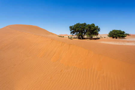 beautiful sunrise landscape of hidden Dead Vlei in Namib desert with blue sky, this is best place in Namibia photo
