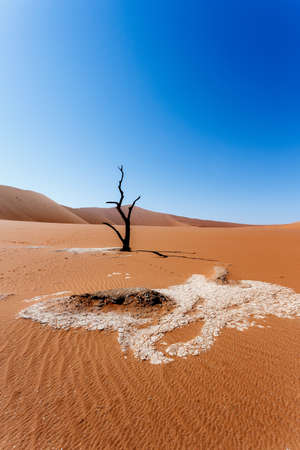 Sossusvlei beautiful sunrise landscape of hidden death valley in Namibian desert with blue sky, best place in Namibia photo