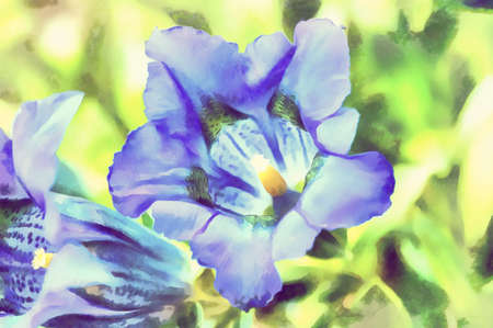 schweiz: Watercolor illustration of trumpet gentiana blue spring flower in garden in vintage color tone Stock Photo