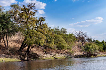 chobe: landscape of Chobe river in Botswana, view from boat