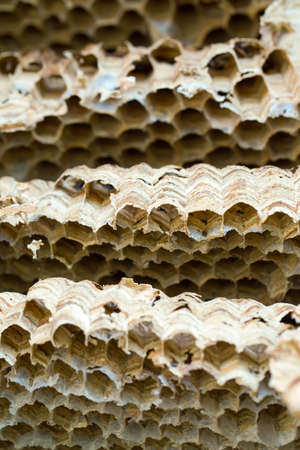 paper wasp: Close up of empty Wasp nest background or backdrop