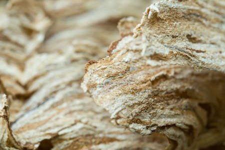 paper wasp: Close up of empty Wasp nest background or backdrop, Yellow Jacket Nest Paper