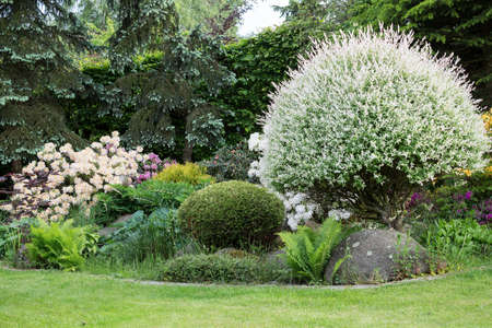azaleas: Beautiful spring garden design with flowering rhododendron and conifers