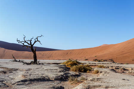 best place: beautiful sunrise landscape of hidden Dead Vlei in Namib desert with dead acacia tree, best place of Namibia