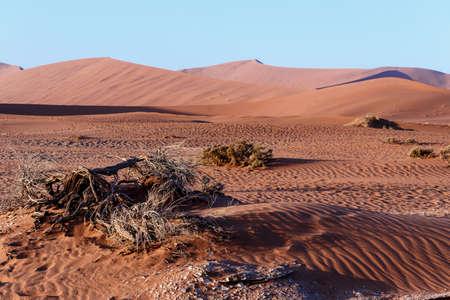 best place: beautiful sunrise landscape of hidden Dead Vlei in Namib desert, best place of Namibia Stock Photo