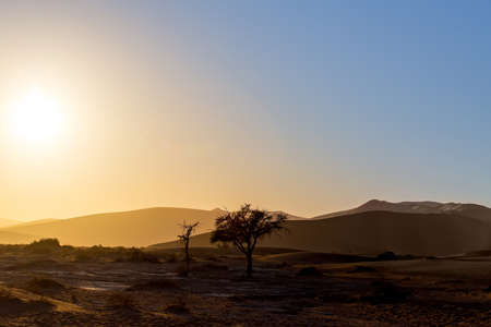 desierto: hermoso paisaje del amanecer de escondido Vlei muerto en el desierto de Namib, el mejor lugar de Namibia, la luz del sol de la mañana con niebla